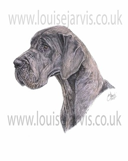 blue great dane ravendane dog pen and watercolour for