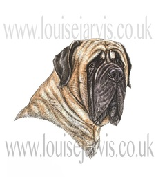 english mastiff dog pen and watercolour for