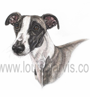whippet dog pen and watercolour for