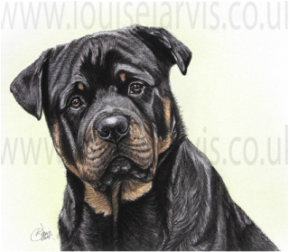 rottweiler rottie dog pen and watercolour for