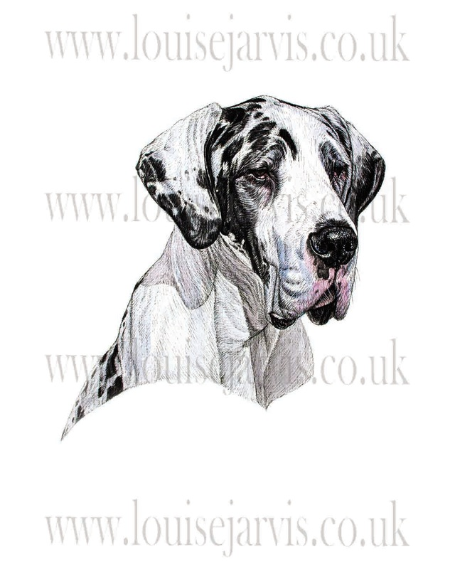 great dane commissioned portrait by Louise Jarvis Art scottish animal artist, pet portraits, dog portraits, commission a portrait, crufts, animal artist, scotland, uk