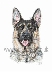 german shepherd police dog pen and watercolour pet portrait by louise jarvis art, scottish animal artist