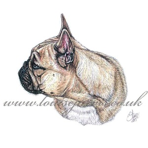 french bulldog frenchie, commissioned portrait by Louise Jarvis Art scottish animal artist, pet portraits, dog portraits, commission a portrait, crufts, animal artist, scotland, uk
