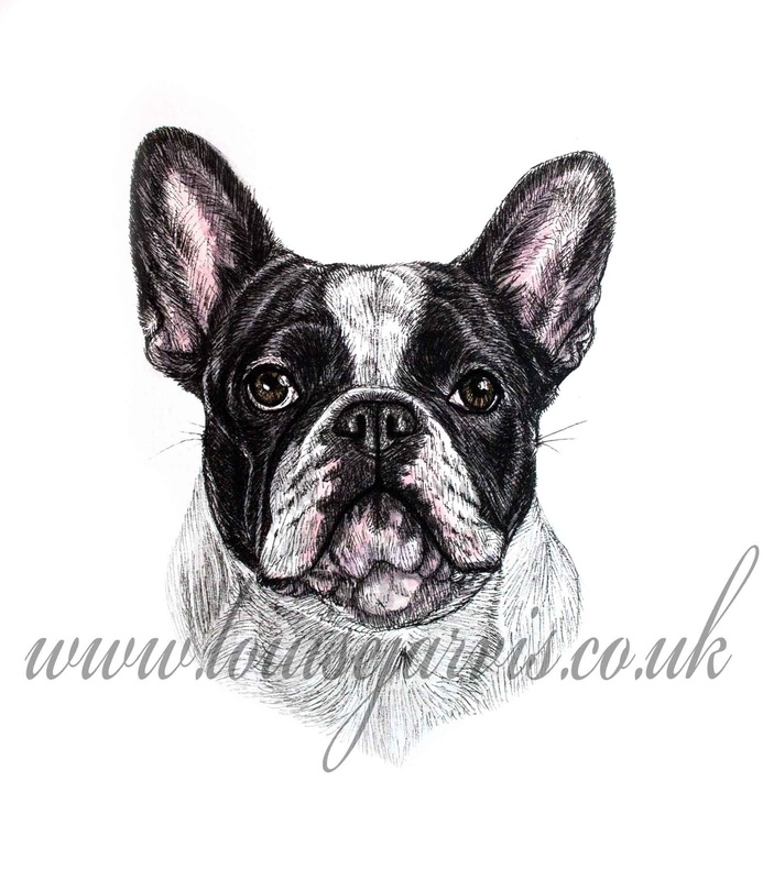 frenchie french bulldog commissioned portrait by Louise Jarvis Art scottish animal artist, pet portraits, dog portraits, commission a portrait, crufts, animal artist, scotland, uk