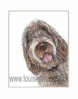 italian spinone commissioned portrait by Louise Jarvis Art scottish animal artist, pet portraits, dog portraits, commission a portrait, crufts, animal artist, scotland, uk
