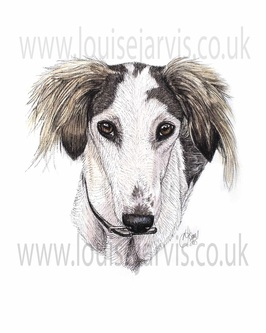 Saluki dog pen and watercolour for