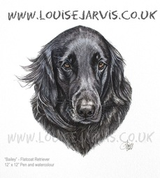 flatcoat retriever commissioned portrait by Louise Jarvis Art scottish animal artist, pet portraits, dog portraits, commission a portrait, crufts, animal artist, scotland, uk