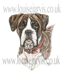 boxer dog pen and watercolour for