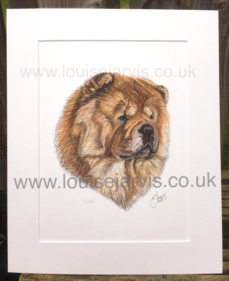 chow chow commissioned pen and watercolour and ink portrait by Louise Jarvis Art scottish animal artist, pet portraits, dog portraits, commission a portrait, crufts, top best animal artist, perthshire scotland, uk