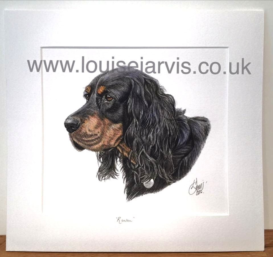 commissioned pen and watercolour and ink portrait by Louise Jarvis Art scottish animal artist, pet portraits, dog portraits, commission a portrait, crufts, animal artist, perthshire, scotland, uk Picture