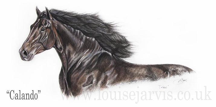 top equine artist, equine art, horse portraits commissioned pen and watercolour and ink portrait by Louise Jarvis Art scottish animal artist, pet portraits, dog portraits, commission a portrait, crufts, top best animal artist, perthshire scotland, uk
