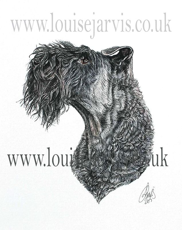 kerry blue terrier commissioned portrait by Louise Jarvis Art scottish animal artist, pet portraits, dog portraits, commission a portrait, crufts, animal artist, scotland, uk