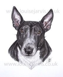 english bull terrier pen and watercolour pet portrait by louise jarvis art, scottish animal artist