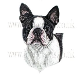 commissioned pen and watercolour and ink portrait by Louise Jarvis Art scottish animal artist, pet portraits, dog portraits, commission a portrait, crufts, top best animal artist, perthshire scotland, uk, boston terrier, Picture