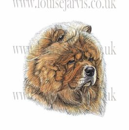 commissioned pen and watercolour and ink portrait by Louise Jarvis Art scottish animal artist, pet portraits, dog portraits, commission a portrait, crufts, top best animal artist, perthshire scotland, uk Picture