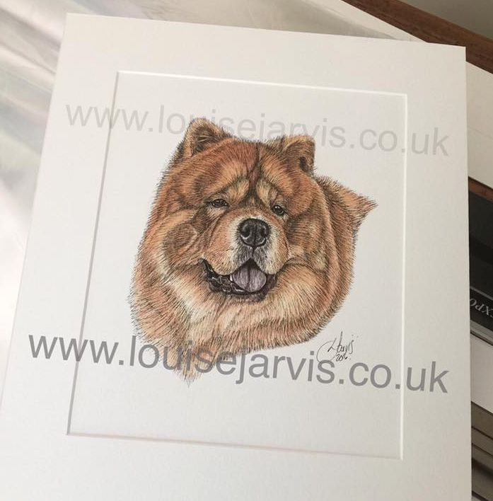chow chow Picture commissioned pen and watercolour and ink portrait by Louise Jarvis Art scottish animal artist, pet portraits, dog portraits, commission a portrait, crufts, top best animal artist, perthshire scotland, uk