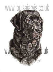 pen and watercolour gallery pet and animal portraits, gifts for dog lovers, dog breed gifts, crufts uk, dog show, clothing, dog scarf, cushion, mugs, phone covers, dog breeds, i love my dog, pet portrait artist, dog portraits, scottish animal artist, louise jarvis, top dog artist uk, best animal art, award winning artist, k9 art, commission a portrait, pen and ink, pen and watercolour art, hounds, terriers, gun dogs, working dogs, pastoral dogs, toy dogs, utility dogs