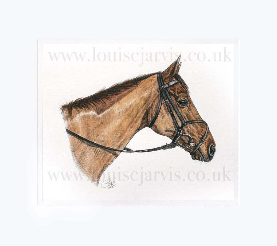 wocket woy and batch, wockey woy, nobby, top equine artist, equine art, horse portraits commissioned pen and watercolour and ink portrait by Louise Jarvis Art scottish animal artist, pet portraits, dog portraits, commission a portrait, crufts, top best animal artist, perthshire scotland, uk, picture