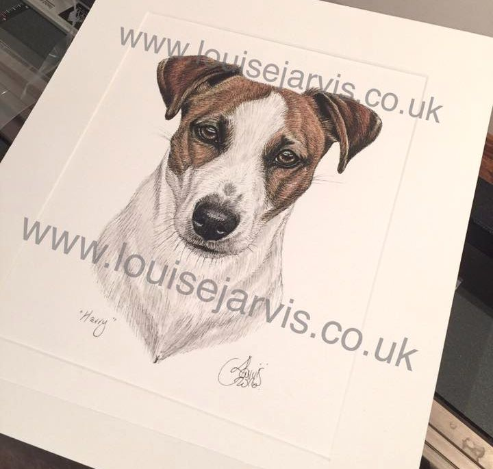 jack russell commissioned pen and watercolour and ink portrait by Louise Jarvis Art scottish animal artist, pet portraits, dog portraits, commission a portrait, crufts, top best animal artist, perthshire scotland, uk, Picture